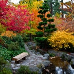 Fall Leaves at Japanese Garden Lithia Park downtown Ashland Oregon